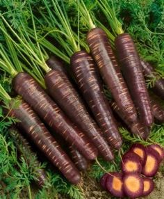 Purple Haze Hybrid Carrot Seeds - Daucus Carota Var. Sativus - 0.25 Grams - Approx 150 Gardening Seeds - Vegetable Garden Seed by Generic Seeds. Save 68 Off!. $1.99. Days Until Harvest: 70. Germination Rate: 85% - Purity: 99% - Country of Origin: USA. Daucus carota var. sativus. 0.25 Grams: Approx 150 Seeds. Generic Seeds: The Same High Quality Seeds Made By Mother Nature Just in Cheaper Packaging. The Purple Haze Hybrid carrot is a great carrot with a dark purple outside and bright orange…