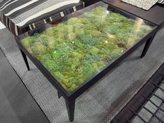 Secret Garden table by Ayodhya  Each table consists of various types of dried moss beneath a transparent glass tabletop, and no watering necessary.