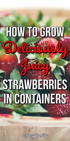 Growing Strawberries In Containers Growing strawberries in pots is an easy way to enjoy fresh fruit even if you don't have a large yard. Read on and learn with complete how-to steps for growing strawberries in containers. Types Of Strawberries, Growing Strawberries In Containers, Growing Tomatoes In Containers, Growing Vegetables, Potted Strawberry Plants, Strawberry Planters, Strawberry Garden, Giant Strawberry, Strawberry Varieties