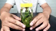 Te drobne liście potrafią zdziałać cuda Po zmieszaniu z oliwy z oliwek Cucumber, Teak, Remedies, Youtube, Food, Diet, Varicose Veins, Plant, Home Remedies