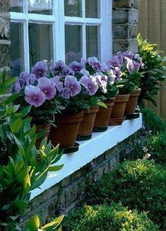 Gardening- a creative journey. Thought for the day. The word pansy is derived from the French word pense, which means to think or thoughts. Pansies are guaranteed to bring cheer and color to your garden in the winter. Pansies will add vibrant color to your flowerbeds or containers. Very hardy and cold tolerant.