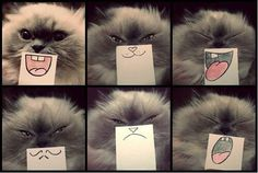 Cute cat faces
