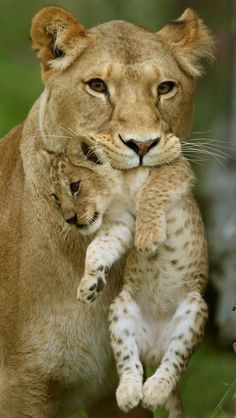 """That does it! No """"Lion King"""" for you tonight!"""