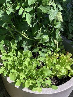 Gartensaison ist immer - Gartentipps von Eva Schumann: Gemüsegarten für Anfänger - 10 Tipps für angehende Selbstversorger Herbs, Organic Fertilizer, Mulches, Compost, Plants, Herb, Medicinal Plants