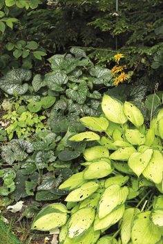Guide to Growing Brunnera - FineGardening Spring Flowers, Blue Flowers, Wooded Landscaping, Fine Gardening, Long Winter, Seed Starting, Propagation, Cool Plants, Spring Garden