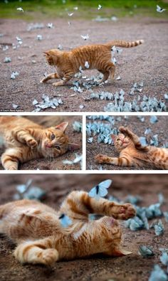 Gato con mariposas azulers