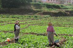 #agriculture urbaine à Meknès #Maroc à la croisée des chemins : disparition d'une agriculture marginalisée ou retour de la cité jardin? https://fr.adalidda.net/posts/an4diWJvbTMaNrrNu/l-agriculture-urbaine-a-meknes-maroc-a-la-croisee-des