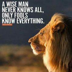 Wise man never know all Lion Quotes, Gods Glory, Self Quotes, Wise Men, Animal Faces, Big Cats, Animals Beautiful, Lions, South Africa