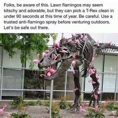 Folks, be aware of this. Lawn flamingos may seem Kisco and adorable, but they can pick a T-Rex clean in under 90 seconds at this time of year. Be careful. Use a trusted anti-flamingo spray before venturing outdoors. Let's be safe out there. Tumblr Stuff, Tumblr Posts, Funny Cute, The Funny, Super Funny, T Rex Jurassic Park, Tumblr Funny, Funny Memes, Silly Jokes