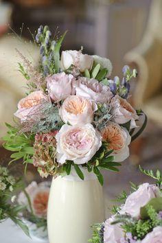 peaches and cream garden roses