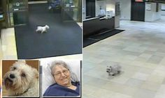 Loyal dog 'Cissy' runs away from her home, travels 20 blocks, turns up INSIDE hospital and sniffs out her cancer-stricken owner   http://www.dailymail.co.uk/news/article-2951068/She-wanted-mom-did-Dog-Cissy-runs-away-home-travels-20-blocks-goes-inside-hospital-foyer-owner-recovering-cancer-surgery.html