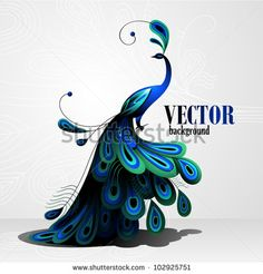 Find Peacock Vector Background stock images in HD and millions of other royalty-free stock photos, illustrations and vectors in the Shutterstock collection. Thousands of new, high-quality pictures added every day. Peacock Vector, Peacock Logo, Peacock Images, Watercolor Peacock, Peacock Drawing, Free Vector Graphics, Free Vector Art, Background Pictures, Vector Background