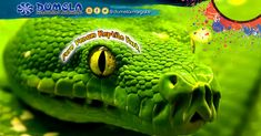 Add some excitement and adventure to your next holiday! Pencil in a visit to the world renowned Pure Venom Reptile Park. Reptile Park, Local Attractions, Adventure Activities, Next Holiday, Venom, Reptiles, Coast, Pure Products