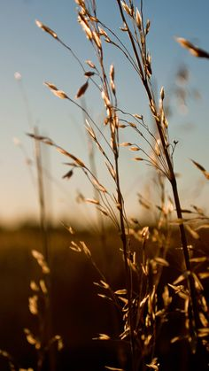 Nature-Sunlight-Weed-iPhone-6-plus-wallpaper-ilikewallpaper_com.jpg (900×1600)