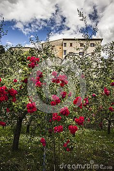 Beautiful garden with roses in Spello, Umbria. Photo by Elisa Bistocchi. #Spello #Umbria #Roses #Flowers #garden #spring #italy #travel #europe #tourism #sky #house #medieval #village