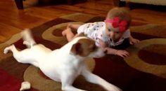 Video: Dieser Hund lernt dem Baby das Krabbeln #News #Unterhaltung