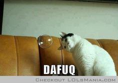 Cat Memes - Lols Mania - Funny Pictures, Memes & Comics
