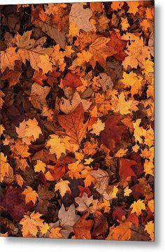 Fallen Autumn Leaves - Metal Print