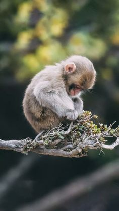 Wild Animals Pictures, Animal Pictures, Cute Pictures, Cute Baby Monkey, Cute Baby Animals, Animals Amazing, Animals Beautiful, Nature Animals, Animals And Pets