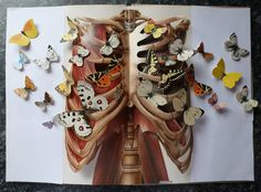 Anatomy Book - Ben Giles, butterfly, colour, pop up, paper craft, artist book