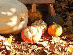 In & around my house : Autumn crochet ! Autumn Crochet, Pumpkin, Vegetables, Garden, House, Pumpkins, Garten, Home, Lawn And Garden