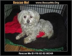 A new animal was posted for adoption on Rescue Me! Click here for details, or share on your timeline by clicking the 'Share' link below. ♥ RESCUE ME! ♥
