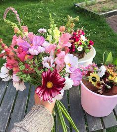 """3 gilla-markeringar, 1 kommentarer - Bergets blommor Kinnekulle (@bergets_blommor) på Instagram: """"Vill du göra dig själv eller någon annan glad? Imorgon lördag finns buketter för 100kr att köpa,…"""" Glad, Flowers, Plants, Instagram, Plant, Royal Icing Flowers, Flower, Florals, Floral"""