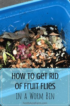 Sometimes things go wrong in a worm bin and fruit flies develop. Learn how to get rid of them quickly, and how to avoid getting them again in the future.