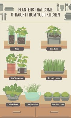 Identify Your Plants in an Indoor Garden This Winter With Quality Markers. http://www.kincaidplantmarkers.com/