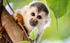 """Victory! Arizona Stops Monkeying Around With Pet Primates - """"In a victory for animals and those working to end the exotic pet trade, Arizona has become the latest state to take a stand against private possession by passing regulations banning primates as pets."""" Read more:"""