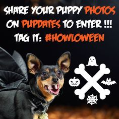 Yappy #Howloween to my precious puppy pals! It's time for our annual costume contest! Enter your photos here: www.dailypuppy.com/pupdates
