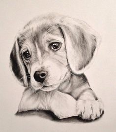 Charismatic Customized hand-drawn portraits are the right option to seize the . Particular person hand-drawn portraits a. Pencil Drawings Of Animals, Animal Sketches, Cute Drawings, Drawing Sketches, Beautiful Pencil Drawings, Drawing Art, Baby Drawing, Drawing Animals, Pencil Drawing Pictures