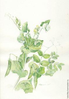 Купить Зеленый горошек - зеленый, зеленый горошек, акварель, акварельный рисунок, огородные растения