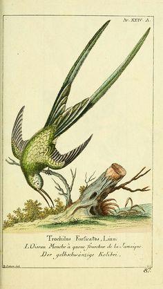 Gemeinnüzzige Naturgeschichte des Thierreichs bd 2 plates  Berlin ;bei Gottlieb August Lange,1780-1789.
