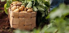 Gumbostrandin uudet perunat Home Food, Wicker Baskets, Homes, Cars, Summer, Life, Home Decor, Houses, Decoration Home