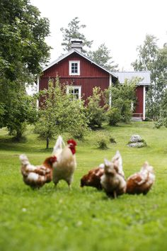 Cock and chickens Swedish Cottage, Red Cottage, Cottage Chic, Country Farm, Country Life, Sweden House, Down On The Farm, Scandinavian Home, Farm Life