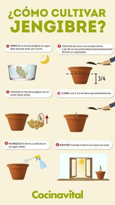 Eco Garden, Vegetable Garden Design, Fruit Garden, Edible Garden, Garden Plants, Growing Vegetables, Growing Plants, Green Life, Garden Projects