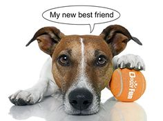 jack russelel honden afbeeldingen   Doggy Fun 5 Ball Pack - 5 Small Replacement Toy Dog Balls for the ...