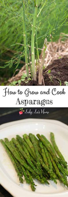 Asparagus is a perennial that once established in the garden will produce for many years, it's also super easy to cook asparagus. Here is how to grow and cook asparagus. #LadyLee'sHome