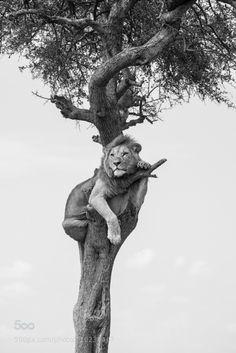 phototoartguy: Crow's Nest by jay rush