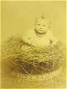 Victorian Baby In Bird Nest 1880 (for sale by antique pets & supplies for 225.00)