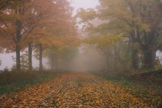 Gal Meets Glam - 2016 October 31 - Misty Morning in Vermont - Location: VT - Travel Photo Inspiration