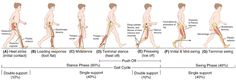 gait cycle normal phases, gait analysis type & probable diagnoses