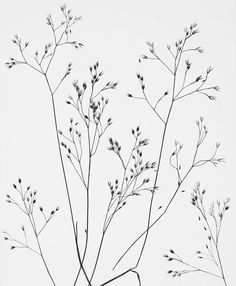 famous photographer research project- Wynn Bullock Botanical Art, Botanical Illustration, Plante Crayon, Pencil Drawings, Art Drawings, Black And White Aesthetic, Flower Doodles, Line Drawing, Art Inspo