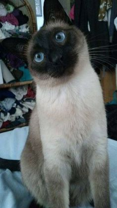 My grandmother had a Siamese Cat named Princess Nicky so when we got a Siamese we gave her the same name.