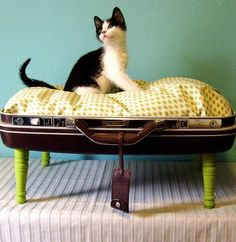 daydripper:  yatsuhashisan:  co2b:  ontheskinny:  I personally would like the suitcase intact, and the kitten sleeping on my bed. Better dea...