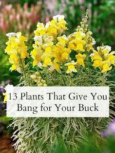 Plants that give you bang for your buck. http://www.goodhousekeeping.com/_mobile/home/gardening/best-plants-for-a-garden?src=spr_FBPAGE&spr_id=1443_63394020#slide-1