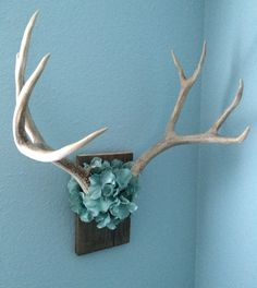 Covered skull of deer antlers with flowers and hung on reclaimed wood.