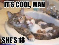 Don't Worry About The Age Cool Man Funny Cats Picture