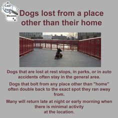 Dogs lost from a place other than their home http://www.lostdogsofwisconsin.org